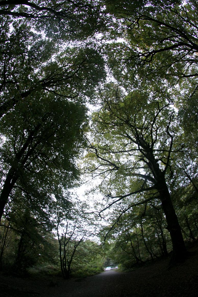 Some trees in Barna woods